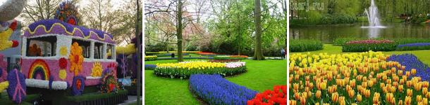 tour-flowers
